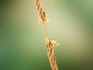 frayedrope